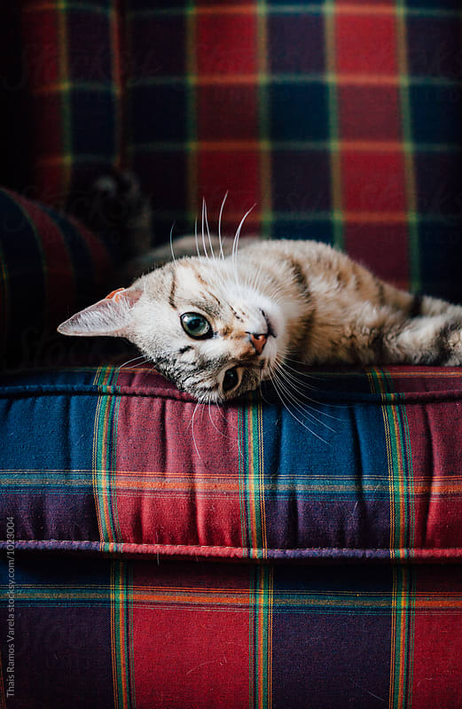 cat lying on the couch by Thais Ramos Varela for Stocksy United