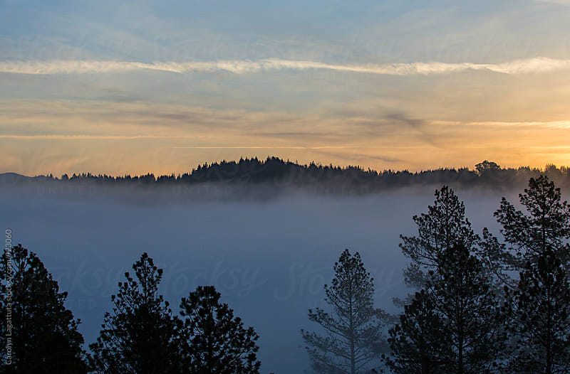 Sunrise with thick fog and trees by Carolyn Lagattuta for Stocksy United