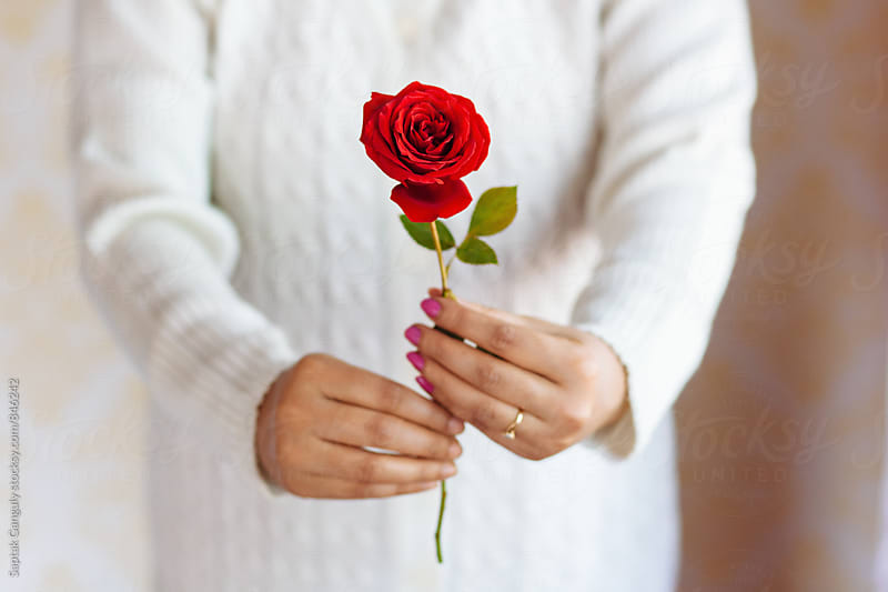 Woman's hand holding a red rose by Saptak Ganguly for Stocksy United
