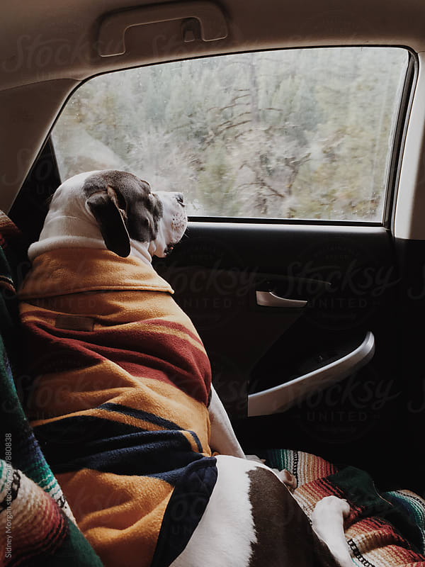 Roadtripping Rodger by Sidney Morgan for Stocksy United