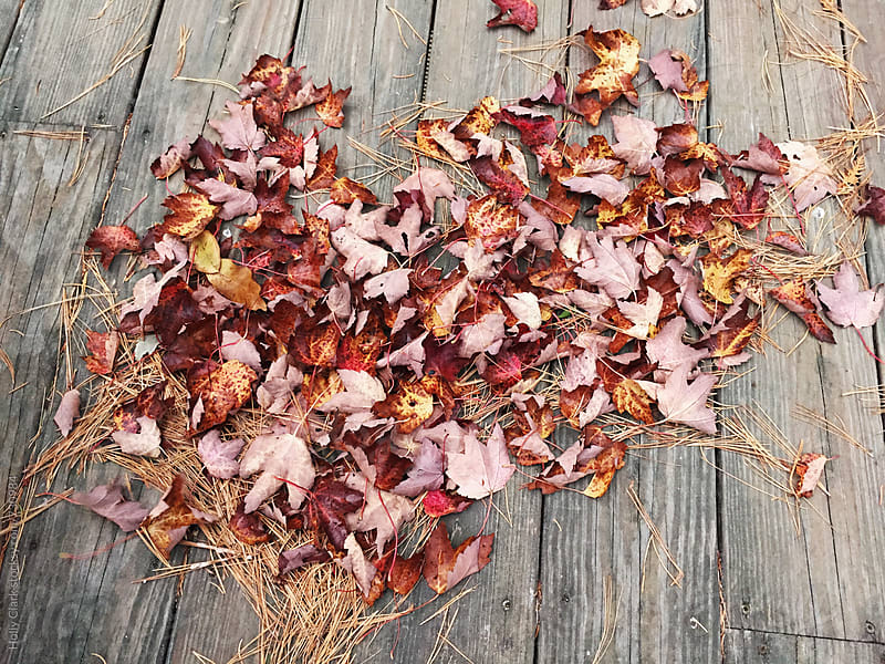 Heart-shaped leaf pile by Holly Clark for Stocksy United