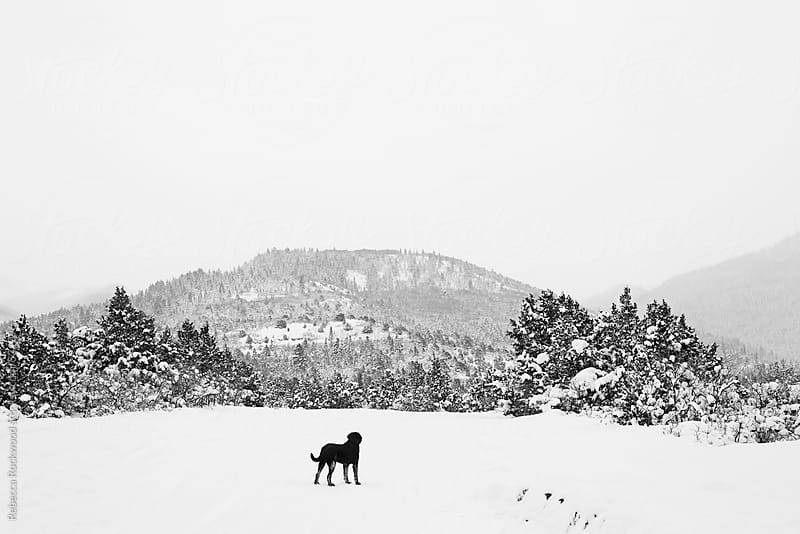 dog in wilderness by Rebecca Rockwood for Stocksy United