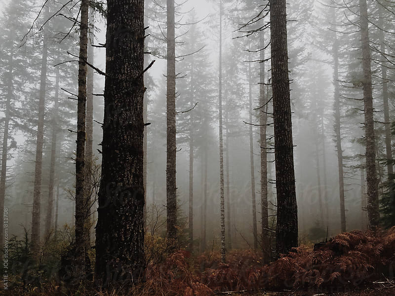 Foggy Forest by KATIE + JOE for Stocksy United