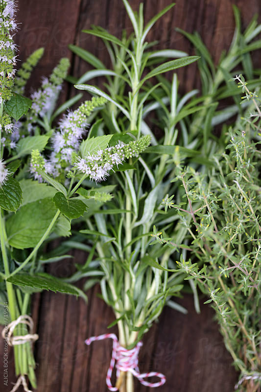 Bundles Of Fresh Herbs: Rosemary, Mint And Thyme by ALICIA BOCK for Stocksy United