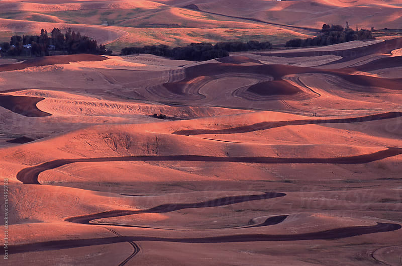 evening palouse prairie road meandering wheat fields harvested stubble fallow by Ron Mellott for Stocksy United