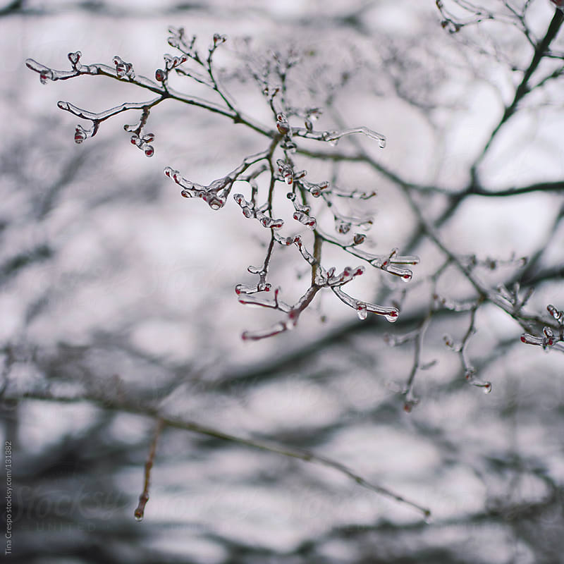 Twigs, Frozen by Tina Crespo for Stocksy United