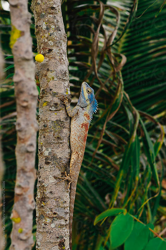 Iguana In A Wildlife by Alexander Grabchilev for Stocksy United
