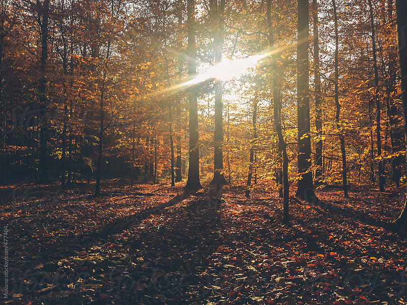 Sun Shining in the Forest by Mosuno for Stocksy United