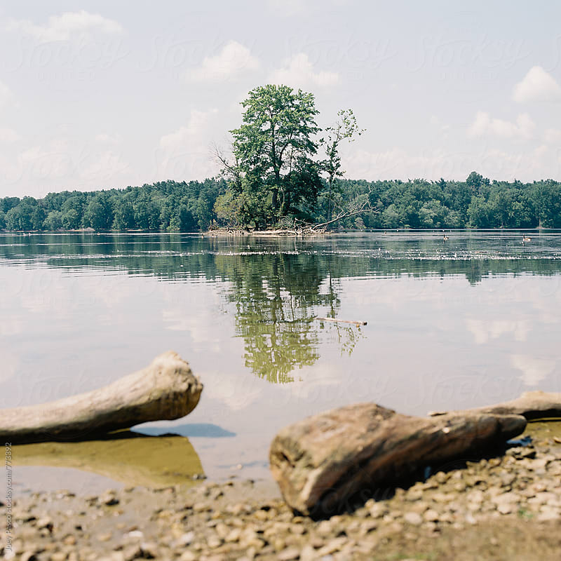 Tree on small island in lake by Joey Pasco for Stocksy United