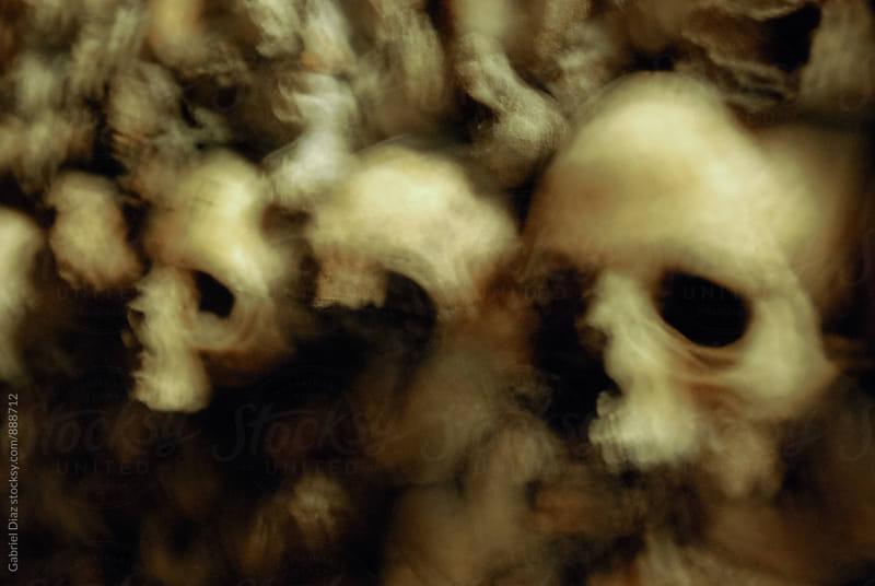 Human skulls by Gabriel Diaz for Stocksy United
