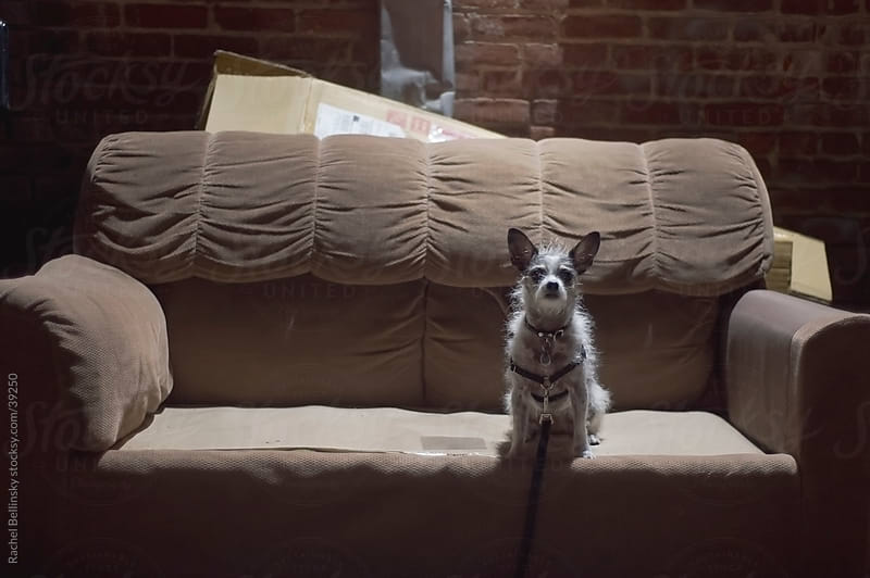 Dog in pool of light on an abandoned sofa in alley by Rachel Bellinsky for Stocksy United