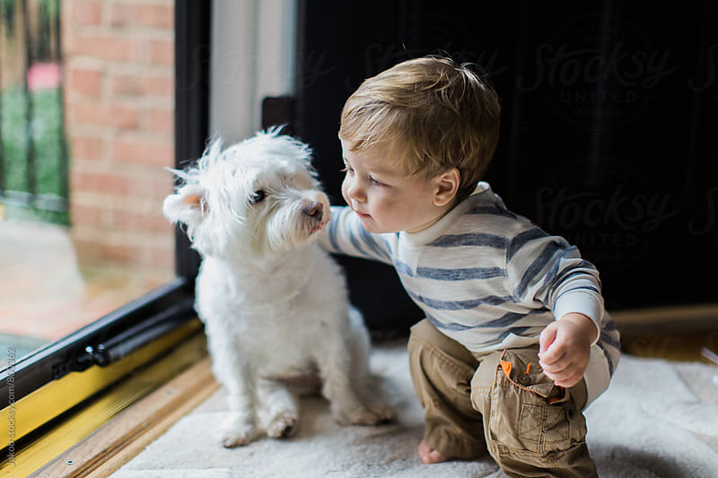 Cute young boy giving his small white dog a hug by Jakob for Stocksy United