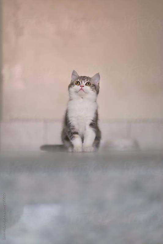 Cat sitting ahead of grey wall by Lawren Lu for Stocksy United