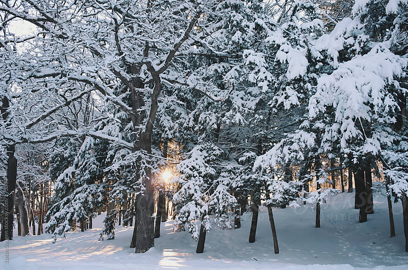 Sun setting behind snow covered trees. by Lucas Saugen for Stocksy United