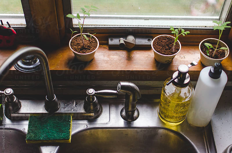 Window ledge over the kitchen sink by Lindsay Crandall for Stocksy United