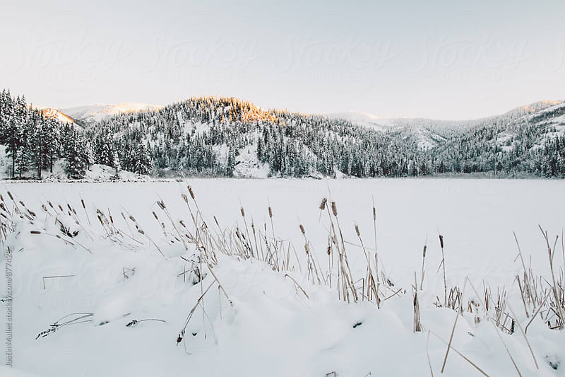 A frozen mountain lake and cattails at sunrise by Justin Mullet for Stocksy United