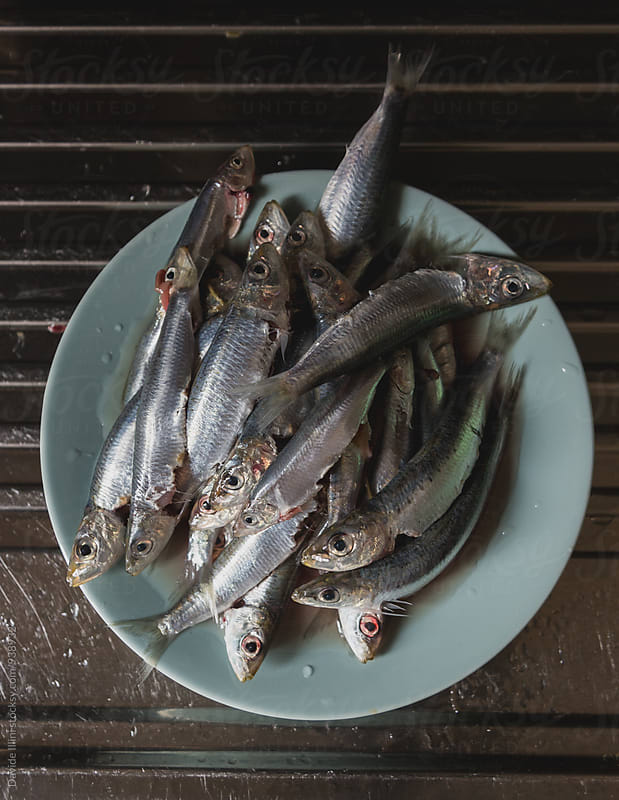 Fresh sardines by Davide Illini for Stocksy United