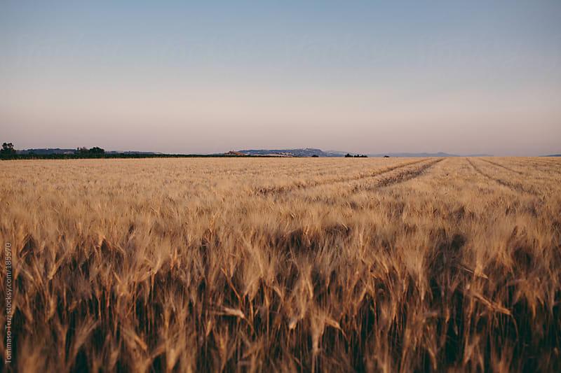 wheat field by Tommaso Tuzj for Stocksy United
