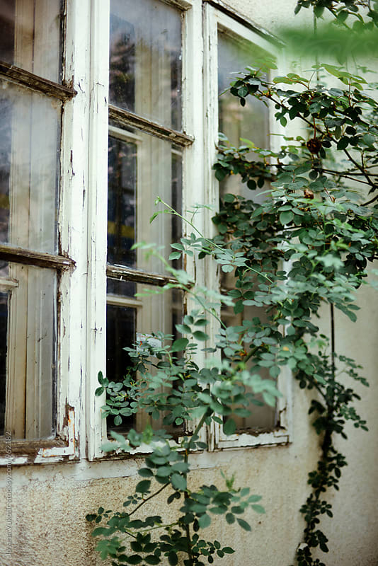 Old window by Jovana Vukotic for Stocksy United