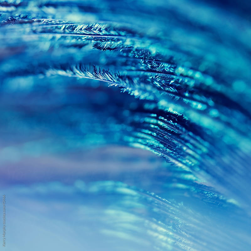 Macro abstract of blue feather by Kerry Murphy for Stocksy United