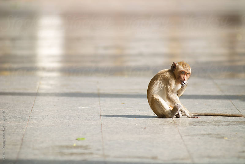 A lonely monkey sitting on the ground by Adrian Young for Stocksy United