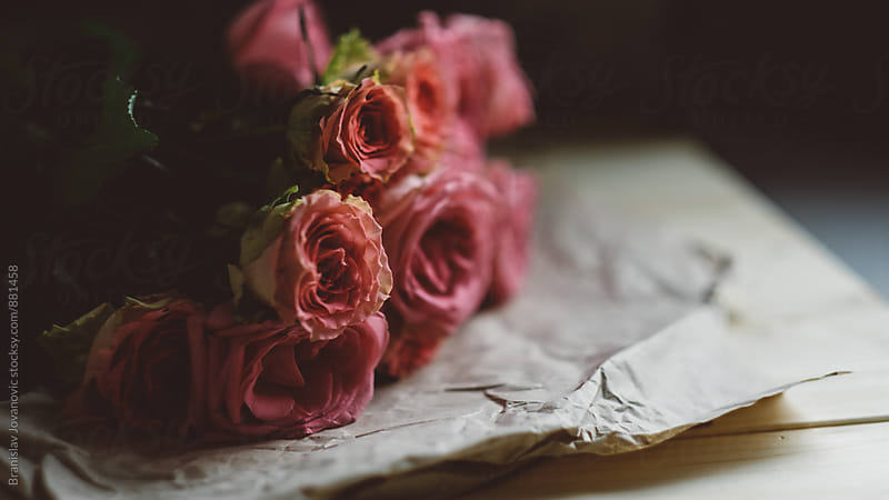 A Bouquet of Pink Roses by Brkati Krokodil for Stocksy United