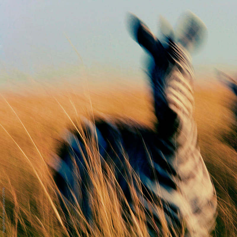 Blurred motion of Zebra. Maasai Mara. Kenya by Hugh Sitton for Stocksy United