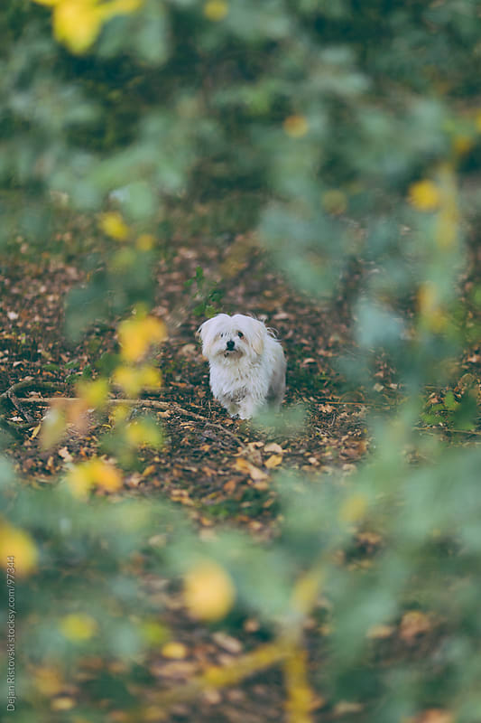Dog standing in to the forest by Dejan Ristovski for Stocksy United