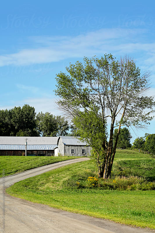 Rural barn on hill in summer by Sandra Cunningham for Stocksy United