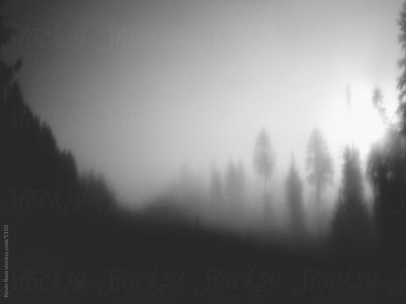Blurred Forest Fog by Kevin Russ for Stocksy United