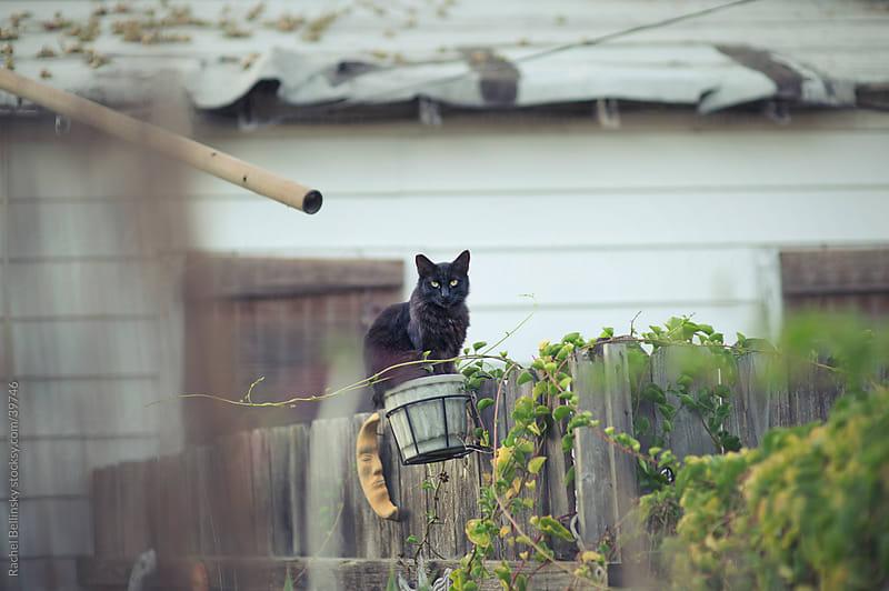 Black cat in a basket on fence by Rachel Bellinsky for Stocksy United