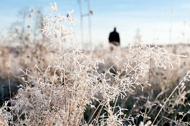 Grass covered with frost by Svetlana Shchemeleva for Stocksy United