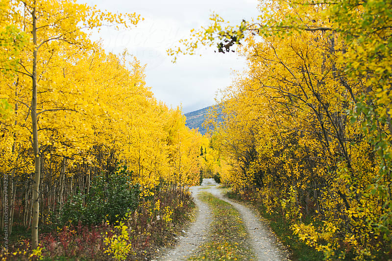 Dirt Road Running Through Fall Trees by Laura Austin for Stocksy United