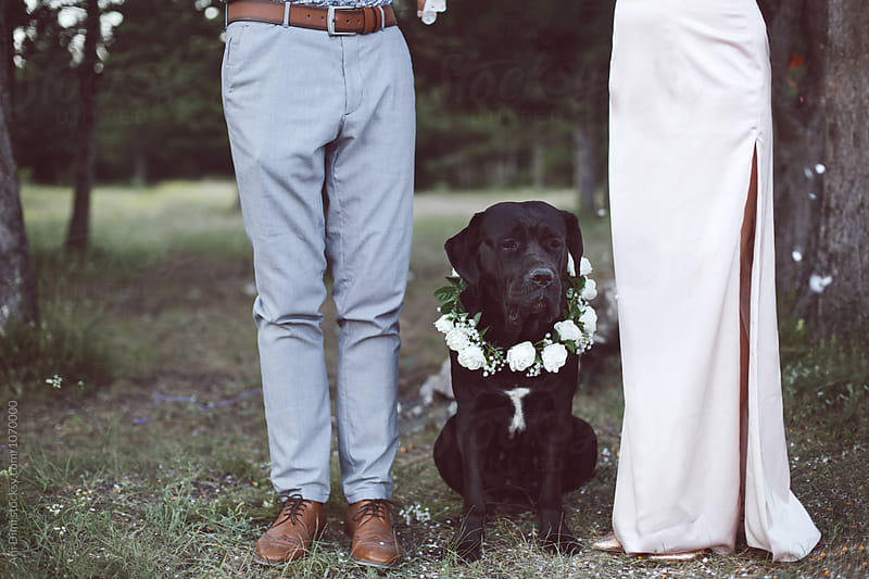 Dog sitting next to the wedding couple by Ani Dimi for Stocksy United