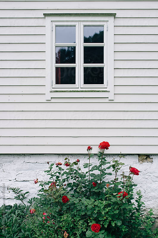 White wooden house with roses by Tomas Mikula for Stocksy United