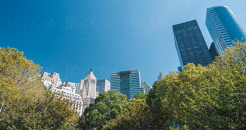 Trees and skyscrapers, park in New York City by WAVE for Stocksy United