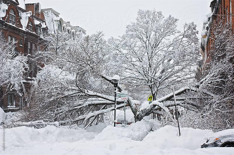 Split tree in a street by Jakob for Stocksy United