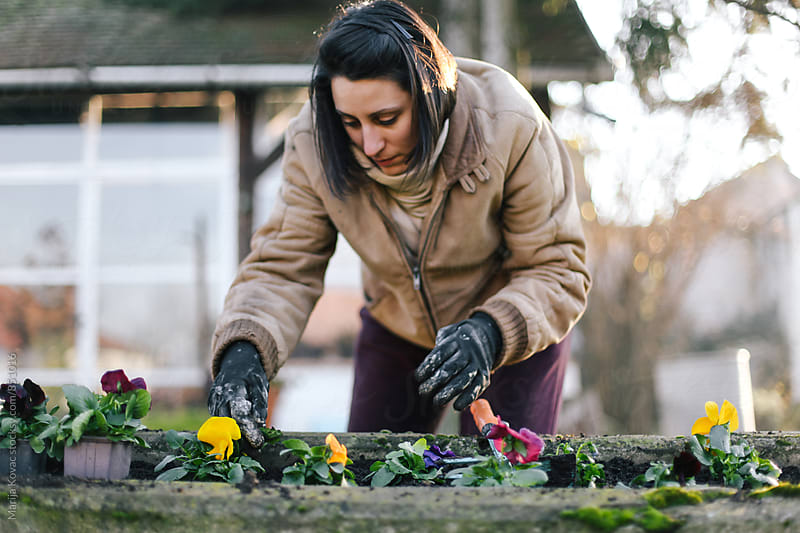 Woman planting colorful flowers - horizontal by Marija Kovac for Stocksy United