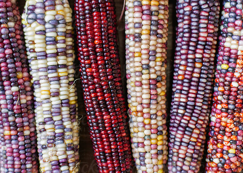 Indian Corn for Fall  by Marta Locklear for Stocksy United