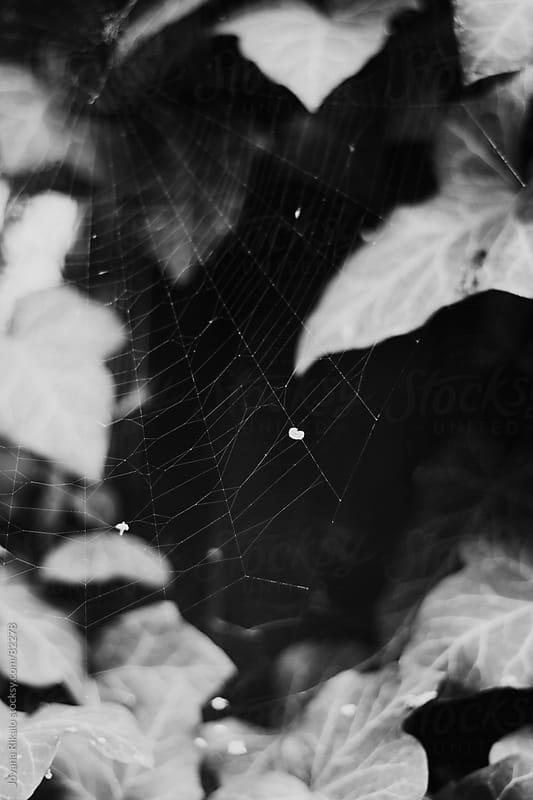 Black and white close-up of spider's web by Jovana Rikalo for Stocksy United