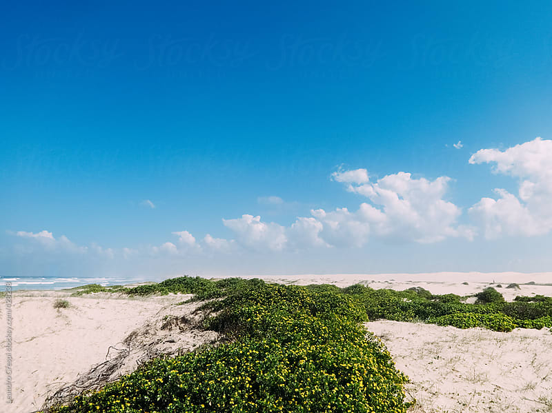 Beach dunes, southern Australia by Leandro Crespi for Stocksy United