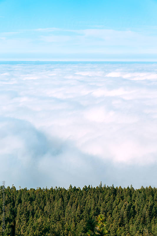 Landscape of clouds over the forest by ACALU Studio for Stocksy United