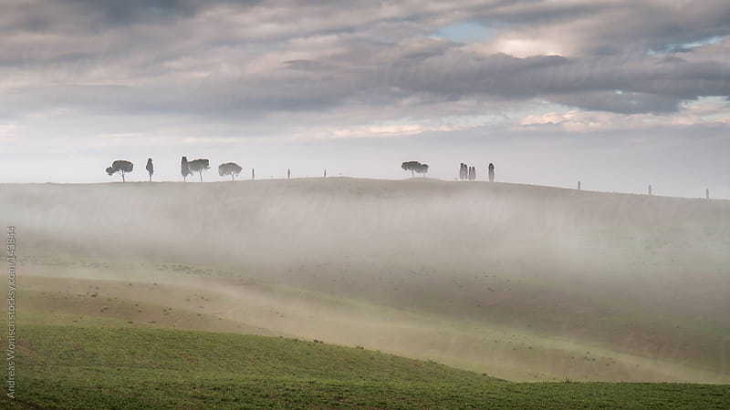 Foggy landscape with trees and cypresses in Tuscany's Val'Dorcia by Andreas Wonisch for Stocksy United