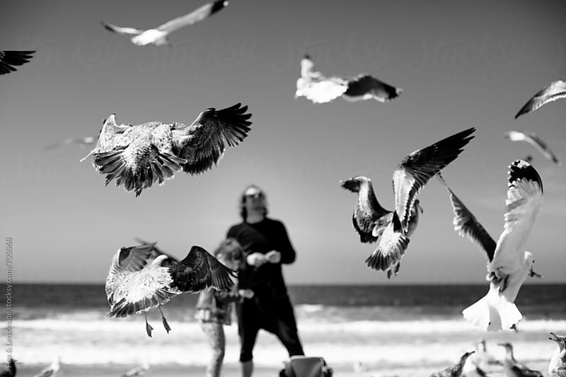 feeding seagulls by Fox & Lemonade for Stocksy United