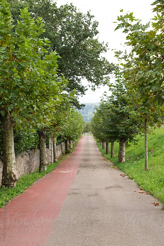 Rural and pedestrian road flanked by trees in autumn by Marilar Irastorza for Stocksy United