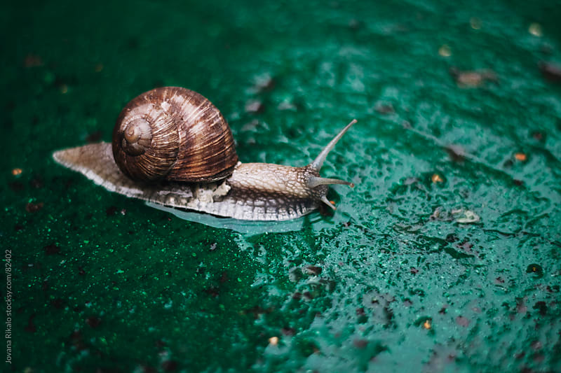 Snail crawling on concrete by Jovana Rikalo for Stocksy United