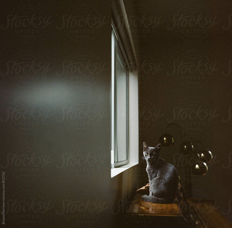 Grey Kitten Sitting Just Inside a Window in a Dark Room by Briana Morrison for Stocksy United