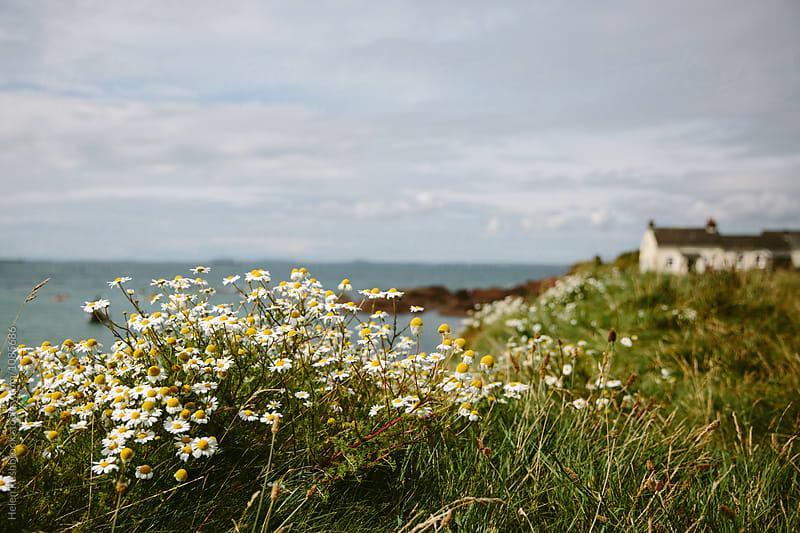 Coastal flowers and a traditional Welsh cottage. by Helen Rushbrook for Stocksy United