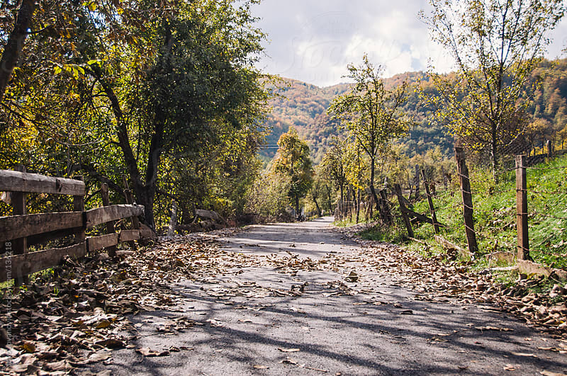 Colorful country road in autumn.  by Jovo Jovanovic for Stocksy United