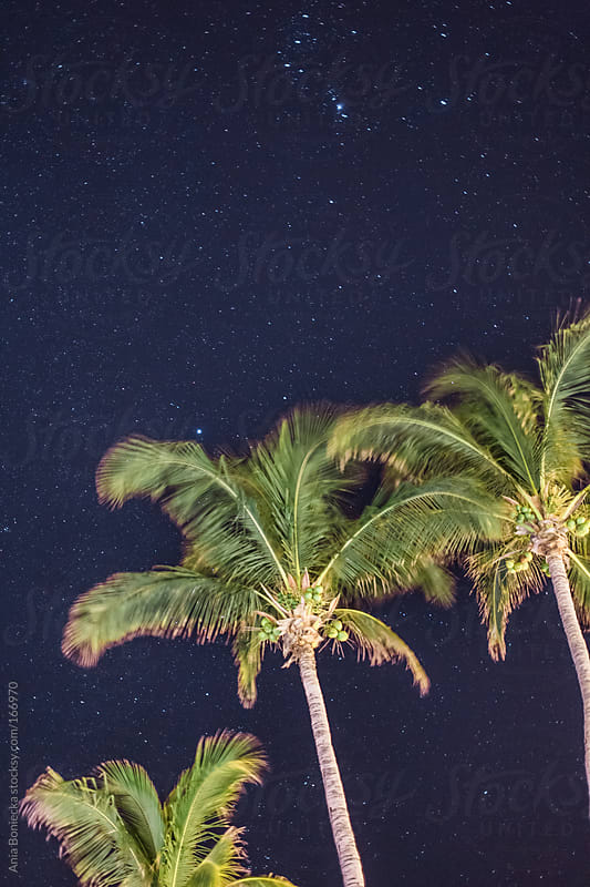 Long exposure of palm trees and the night sky by Ania Boniecka for Stocksy United